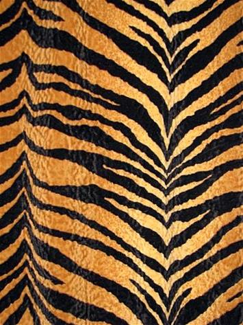 Bengali Gold Tiger