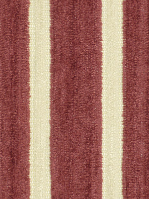 SOFT STRIPES TULIP